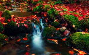 long exposure photography of a stream