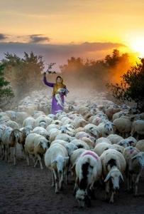 photo of woman holding lamb